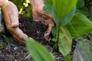 Comment prendre soin des plantes naturellement?